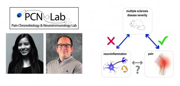 Ghasemlou lab report on an improved model to study chronic pain in a mouse model of multiple sclerosis